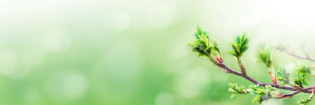 Green branch with leaves on blurred greenery background in the garden with copy space, using as background natural green plants landscape, ecology Banque d'images
