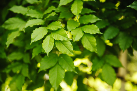 fresh and green leaves. Stock Photo