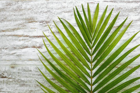 green palm leaves on a wood floor background