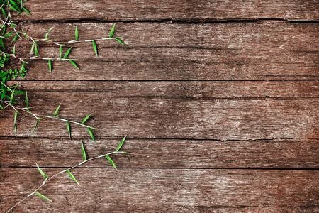 leaves on the old wooden background. copy space.