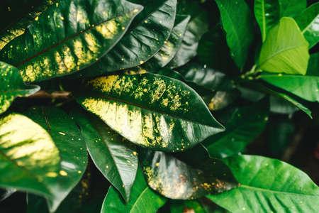 Green leaves pattern background, Natural background 版權商用圖片