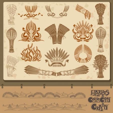 sheaf: cosecha de granos y colecci�n de elementos Shief Vectores