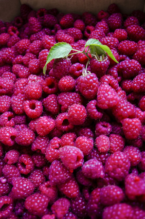 juicy: juicy raspberries