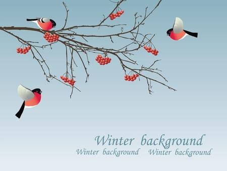 Vogelbeere: Gimpel auf dem Zweig. Vektor-Illustration.