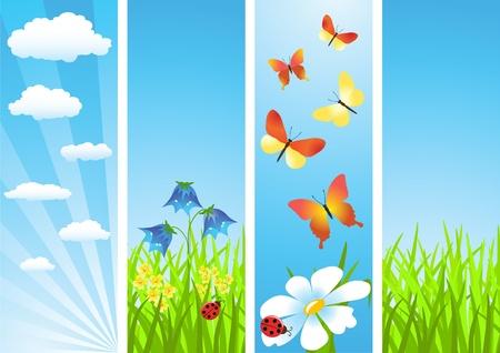 Meadow. Summer morning. Vector illustration. Stock Vector - 11647855