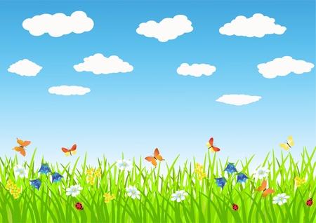 grass plot: Meadow. Summer morning. Vector illustration.
