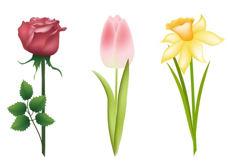 Floral set. Rose, tulip, daffodil. Vector illustration. Vector