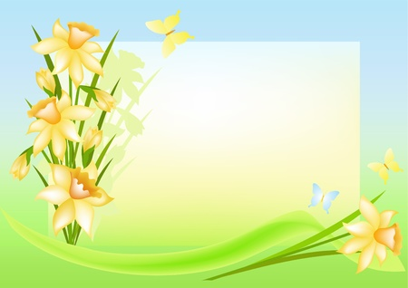 daffodil: Floral background with place for your text. Narcissi. Vector illustration.