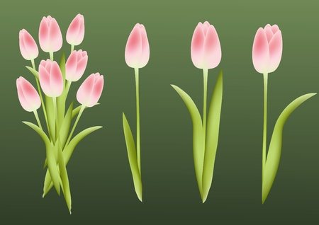 Tulips. Design element. Vector illustration. Vector
