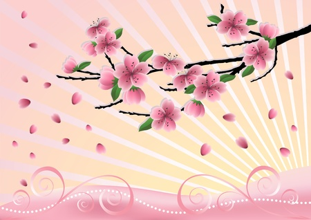 plum blossom: Blossom  cherry-tree. Vector  illustration.
