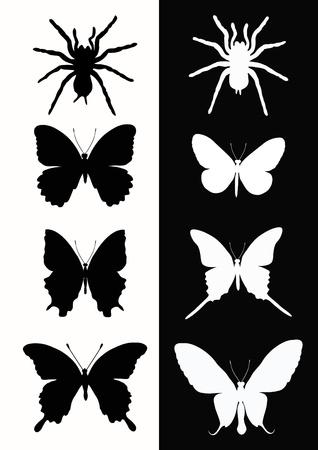 silhouette papillon: Réglez les insectes. Papillon et l'araignée. Vector illustration. Illustration