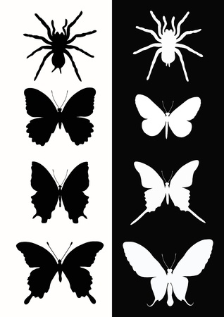 butterfly silhouette: Set insect.  Butterfly and spider.  Vector  illustration.