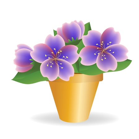 potted: Violet. House plant.
