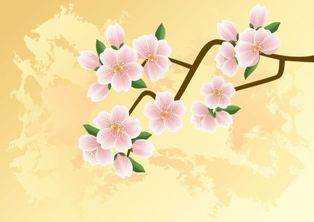 Sakura, cherry-tree,  Vector