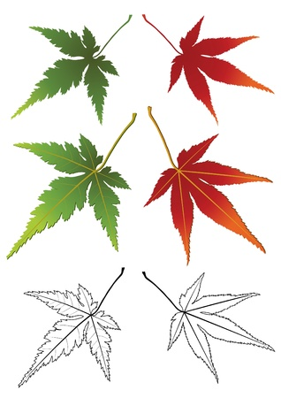 japanese maples: Set of autumn leaves isolated