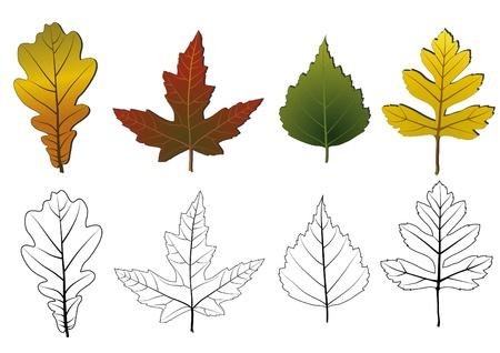 foglie di quercia: Set di foglie di autunno isolato Vettoriali