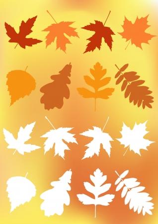 Set autumn leaves  Vector illustration  Vector