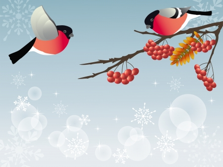 year january: Bullfinch on the branch     Illustration