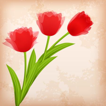 �ard: Greeting сard with tulip  Vector illustration