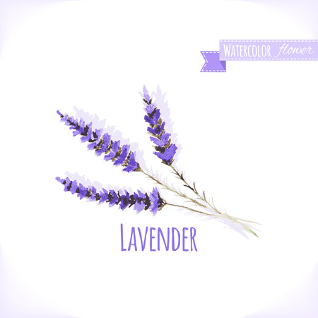 Vector watercolor lavender. Illustration for greeting cards, invitations, and other printing projects