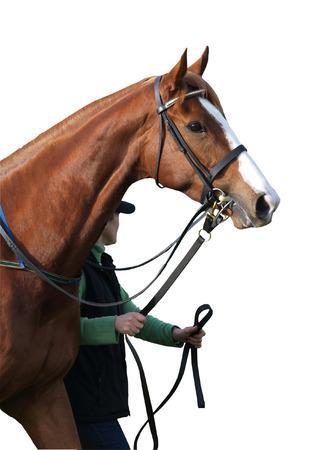 Caballo de carreras y Handler  Foto de archivo - 1397675