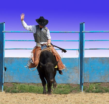 arena rodeo: Bull rider  isolated