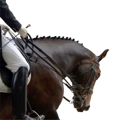 Dressage horse in action during a competition