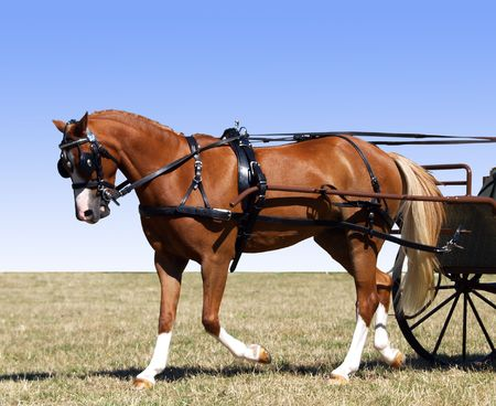 blinkers: Partial isolation of a pony in Harness for a carriage