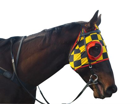 Race horse with checkered blinkers isolated