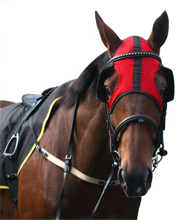 blinkers: Racehorse with Red Hood