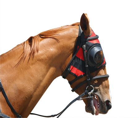 blinkers: Chestnut Racehorse with Red Hood
