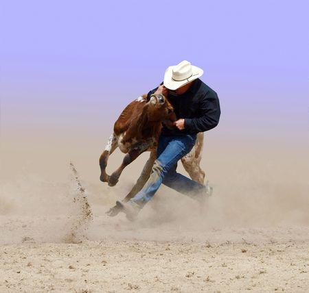 Cowboy wrestling with a steer.