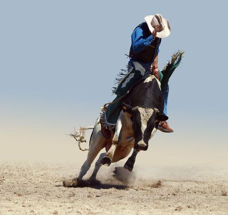 Cowboy Riding a Fresian Bull