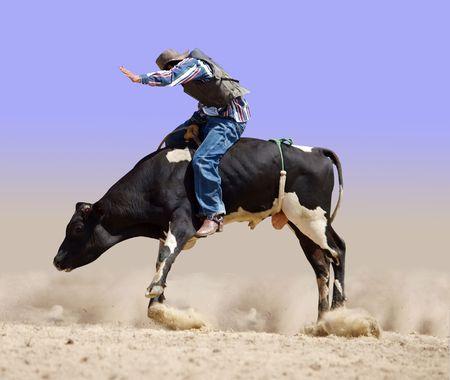reins: Cowboy Riding a Fresian Bull  Stock Photo