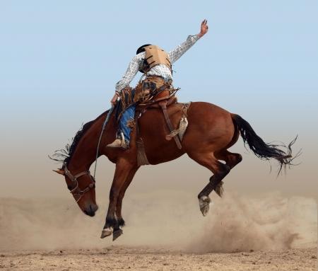 Bucking Rodeo-Horse, die isoliert  Standard-Bild