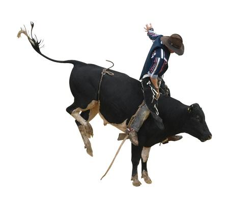 toros bravos: Bull Fresian Yendo con Cowboy aislado