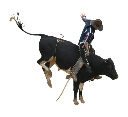 arena rodeo: Fresian Bucking Bull with Cowboy isolated
