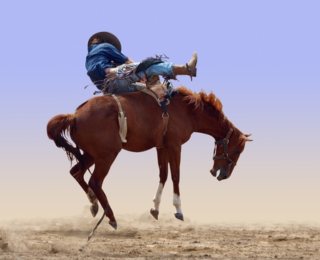 bucking horse: Bucking Rodeo Horse isolated
