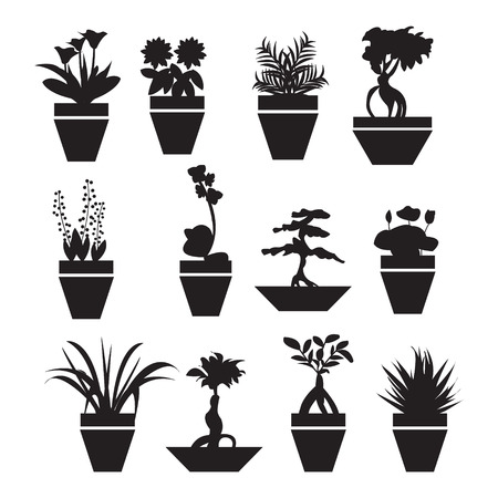 ferns and orchids: set of silhouettes of flowers in pots - Illustration Illustration