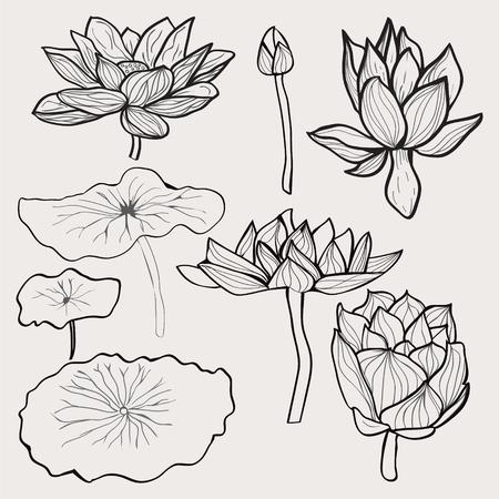Vector conjunto de hermosas flores en blanco y negro y las hojas de loto dibujados a mano. colección floral del bosquejo en estilo blanco y negro para colorear página.