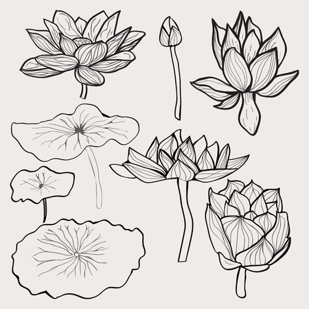 lily flowers collection: Vector set of Beautiful monochrome hand drawn lotus flowers and leaves. Sketch floral  collection in black and white style for coloring page.