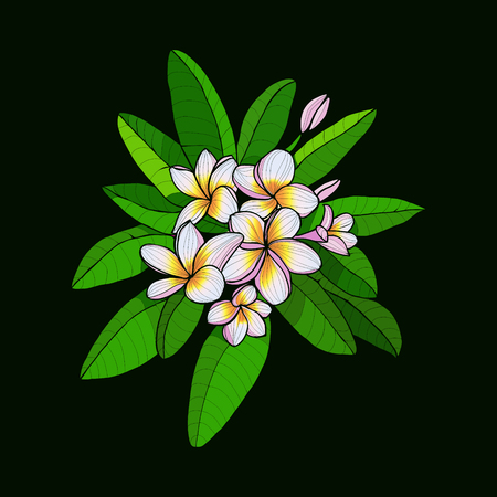 hawaii flower: Beautiful Bouquet with  Hawaii flower Frangipani and leaves, white Plumeria on dark green background. Vector floral elements in contour style for print or summer design.