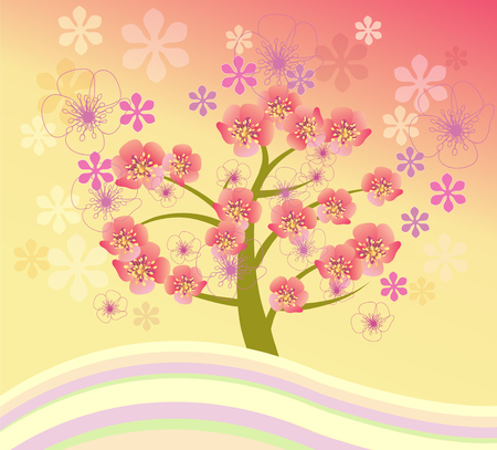 cherry blossom tree: spring background cherry blossom. Isolated beautiful cherry blossom tree.