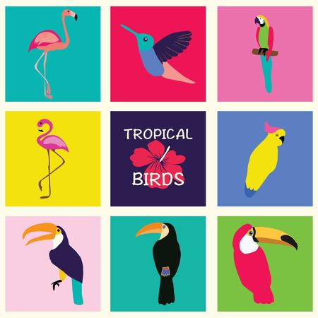 cockatoo: hand drawn Tropical Set of birds. Bright exotic tropical birds. Parrot, Cockatoo, flamingo, toucan, hummingbird.