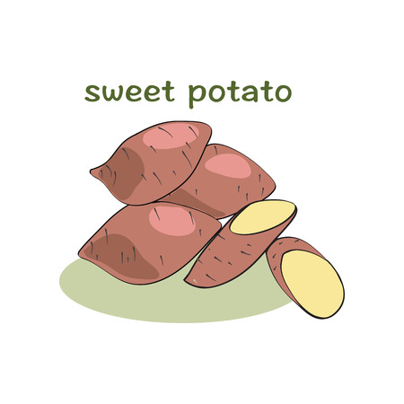 Sweet potatoes isolated on white background, illustration, vector