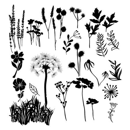 Hand gezeichnet Vektor Sammlung Silhouette Illustration der wilden Blumen, Kräuter und Gräser.