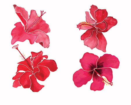Hand-drawn Watercolor illustration beautiful set with hibiscus flowers on white background. Stock fotó