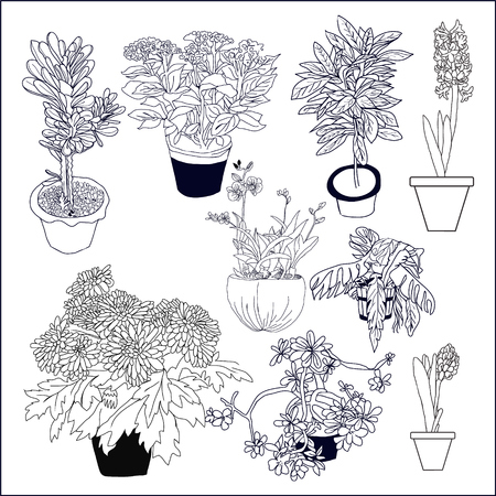 hand drawn illustration set of different house plants on white background perfect for invitations, birthdays, weddings, scrapbooking