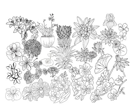 Vector Tropical flowers big set sketch illustration. Hand drawn botacal floral design elements. Hibiscus, plumeria, lily, pritea, orchid etc. isolated on white background. Illustration