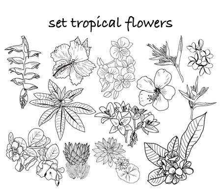 Vector collection of hand drawn tropical flowers, leaves, jungle plants. Black and white exotic floral illustration. Can use  composition for invitation to party or holiday.